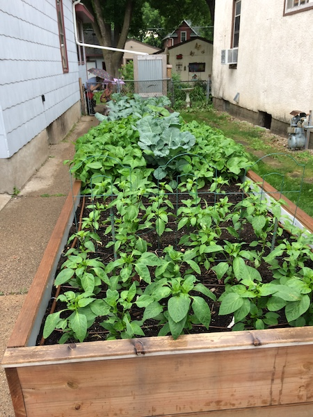 planted by june vegetables
