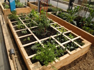 raised bed square foot garde