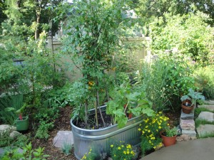 In this partial shade spot, a container is used to grow cherry tomatoes and chard.