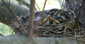 Trees and shrubs give shelter to birds.