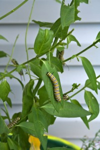 If you want Monarch butterflies, plant milkweed for the caterpillars.