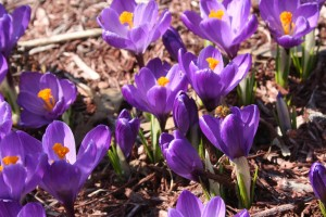 Plant bulbs, such as crocus, for early bloom and late-season plants, such as asters, for late bloom.