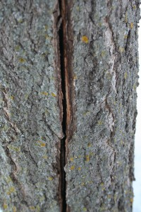 Some trees will actually crack after a difficult winter. Most will heal themselves.