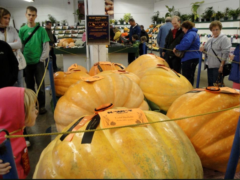 big pumpkin3