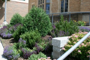 One of the many Northfield public areas planted by Judy Code.