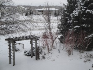A pergola, some red twig dogwood and a backdrop of large evergreens makes this winter scene interesting.