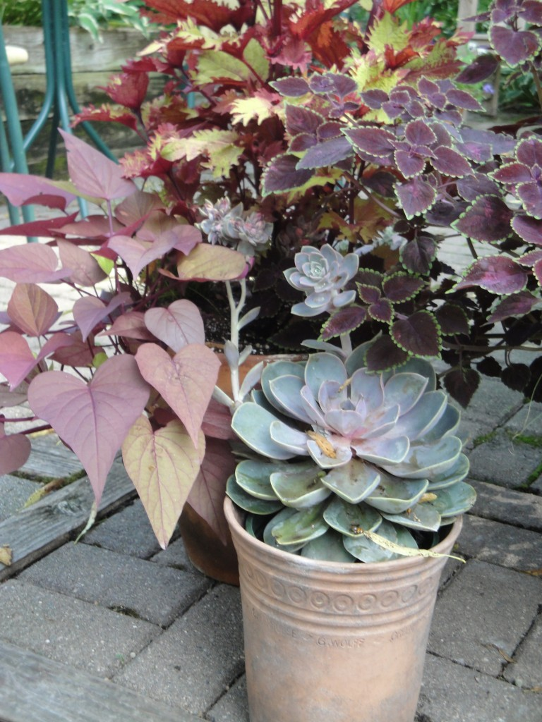 A grouping of all foliage containers adds interest all season long.
