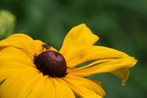 Pollinators and the plants they love will be the topic of several talks at the garden show.