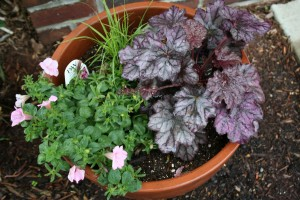 Two foliage plants (the grass and heuchera) combine well with one flowering plant (calibrachoa).