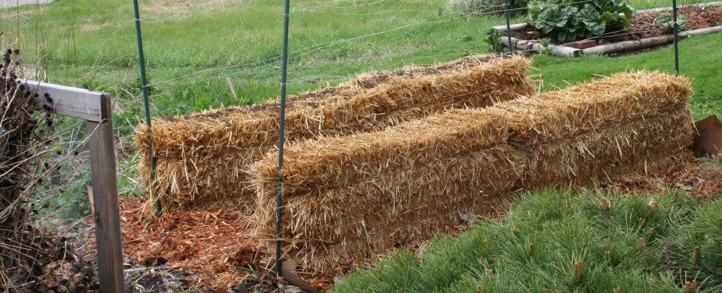 Straw bales ready to be planted.