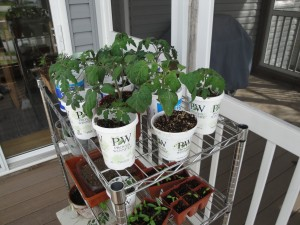 It's not too late to start seeds indoors! Before you know it, they will be hardening off and getting ready for planting.
