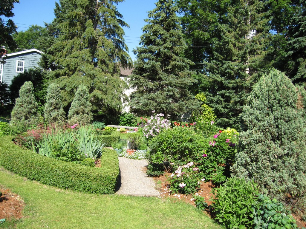 A large collection of conifers gives structure to the Shannon garden.