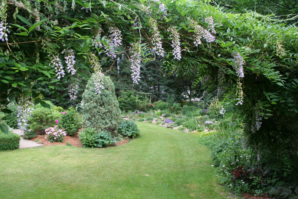 Wisteria adorns an archway leading to one of the garden rooms.