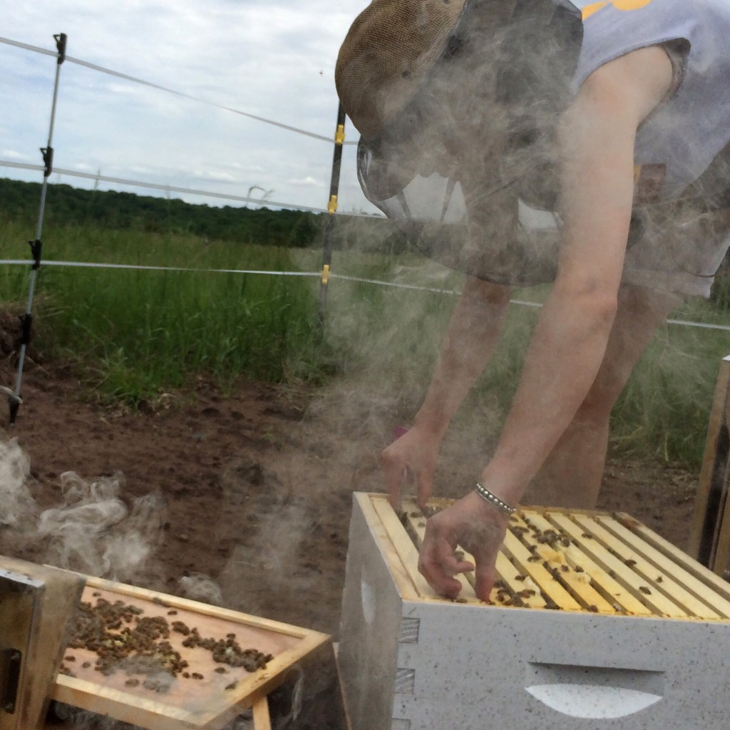 The Bee Squad manages hives for land owners.
