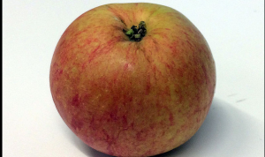 Wealthy apple -- photo courtesy of Creative Commons