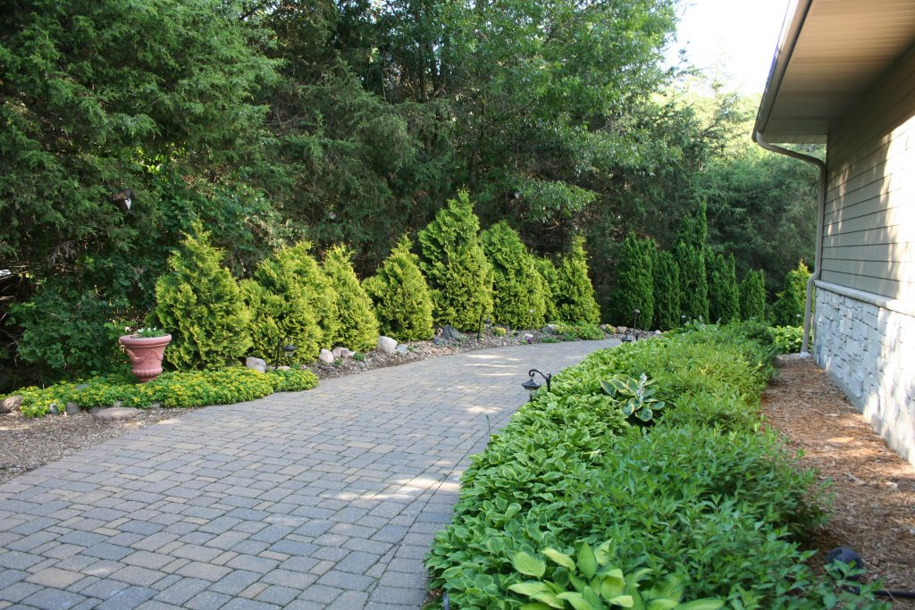 Lined with arborvitae, the path to the back garden is wide and inviting.