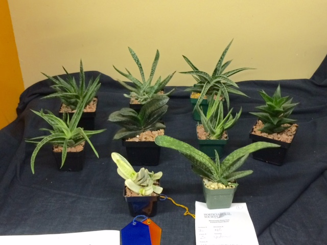 Best Plant Collection
