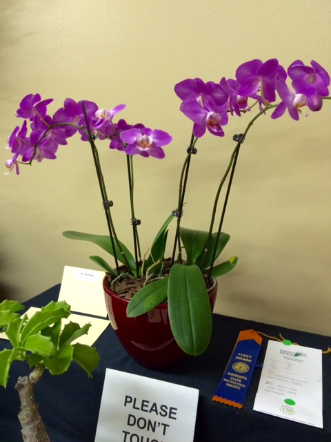 best orchid