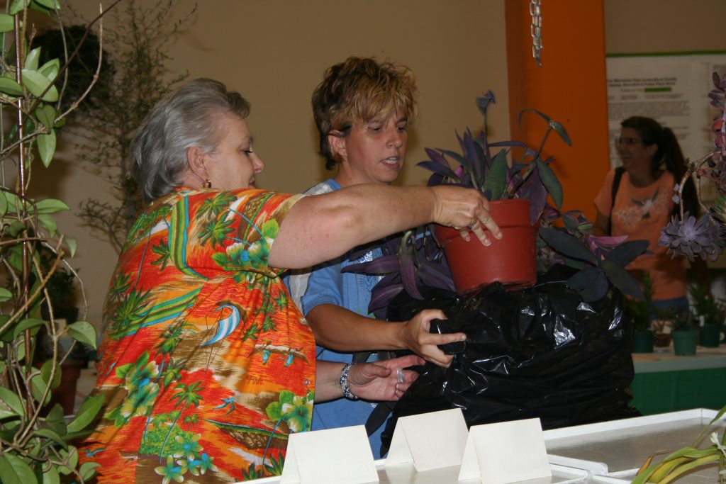 MSHS volunteer helps out at the Potted Plant Show.