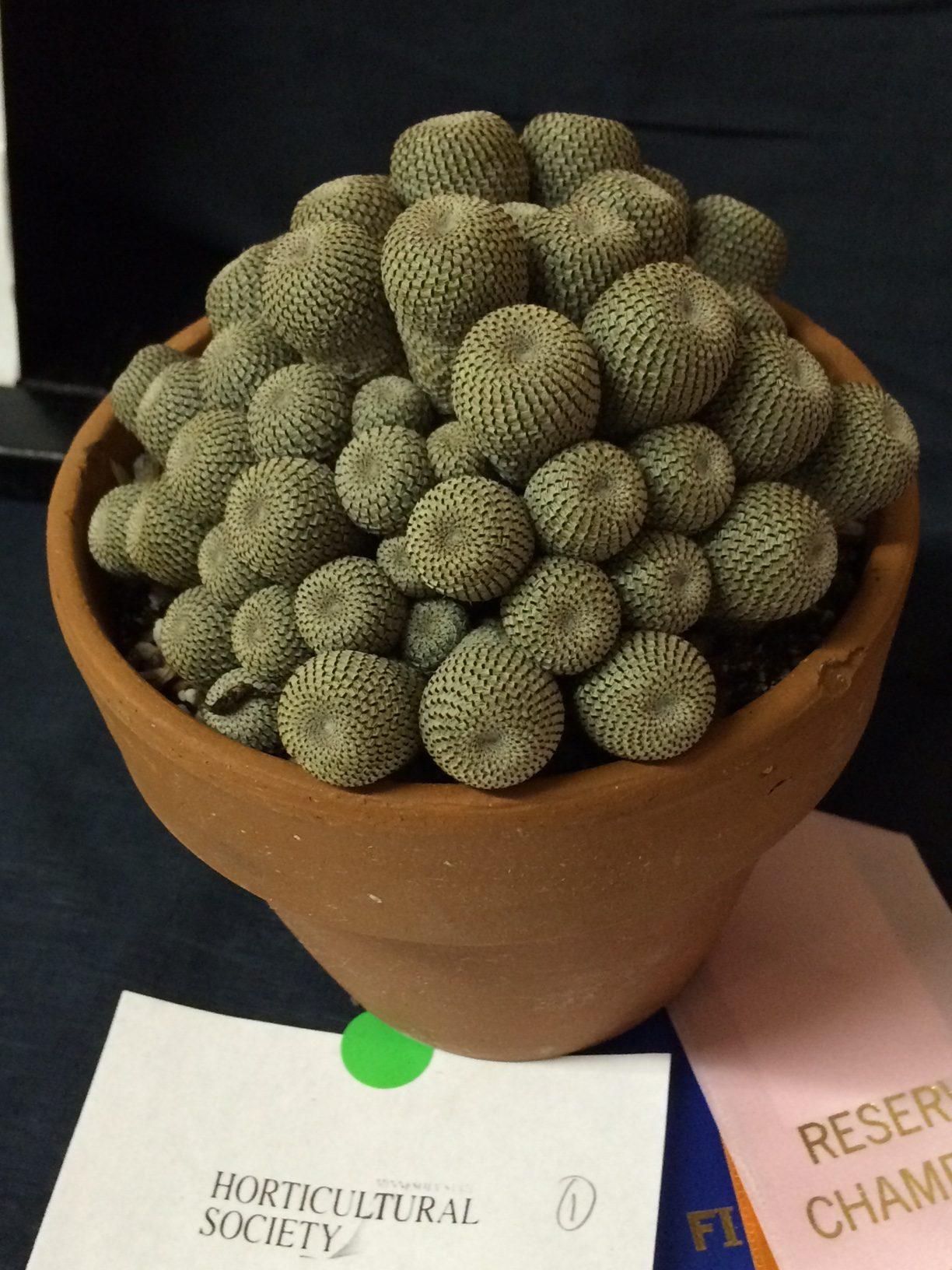 Isn't this a fun plant! W