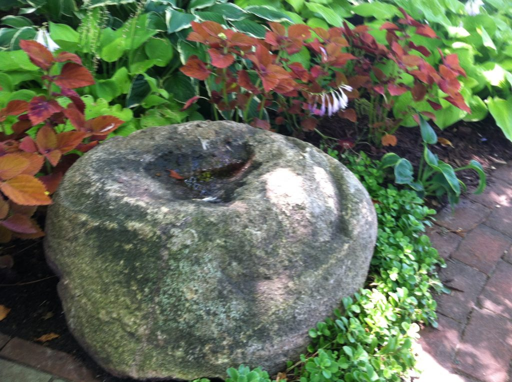 A stone with an indentation collects water, making it an attractive birdbath.