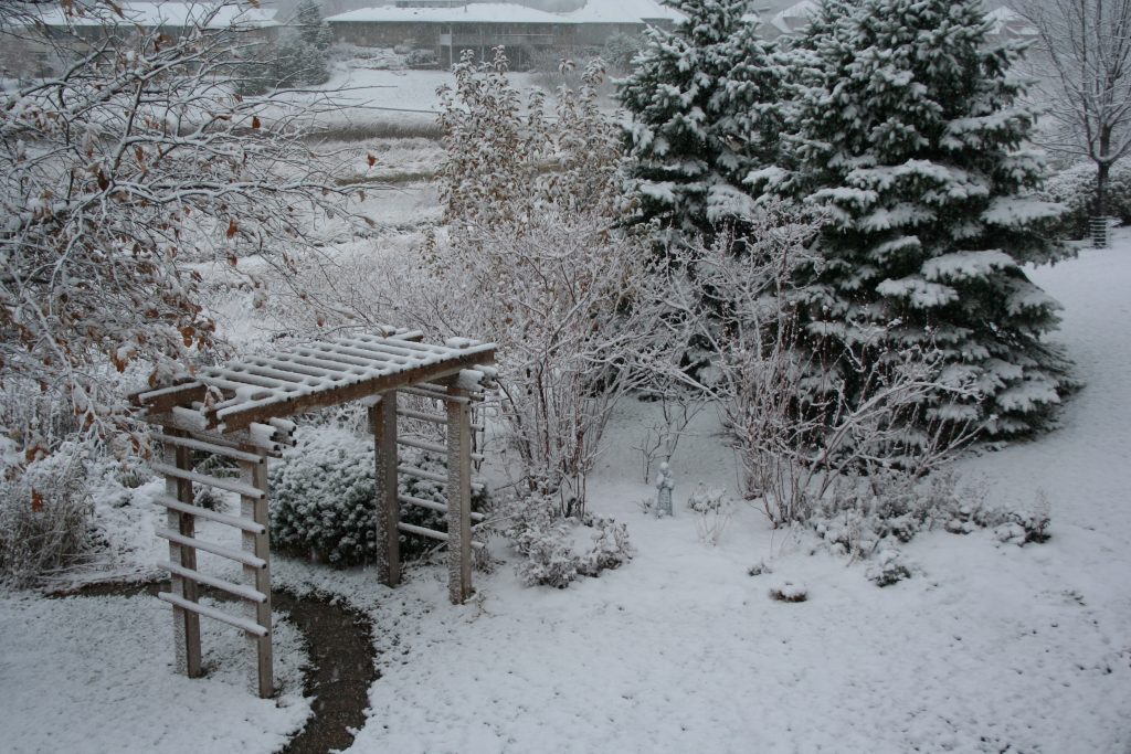 On Nov. 7, 2008, this garden was covered in snow. The November garden is often a surprise