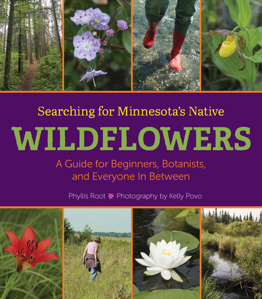 Minnesota's native wildflowers cover