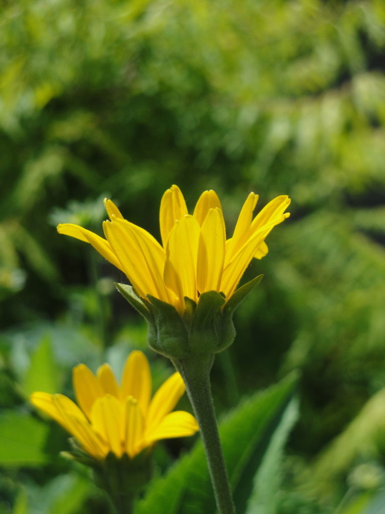 Three Tips From A Pro For Better Garden Photos Minnesota State