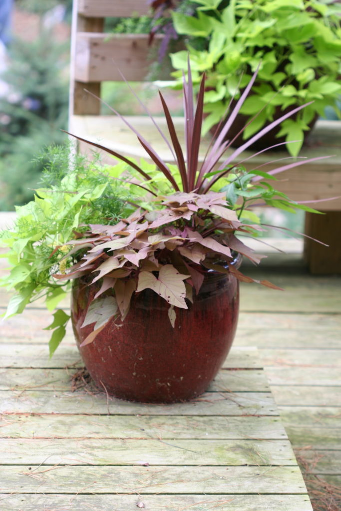 brown container with plants
