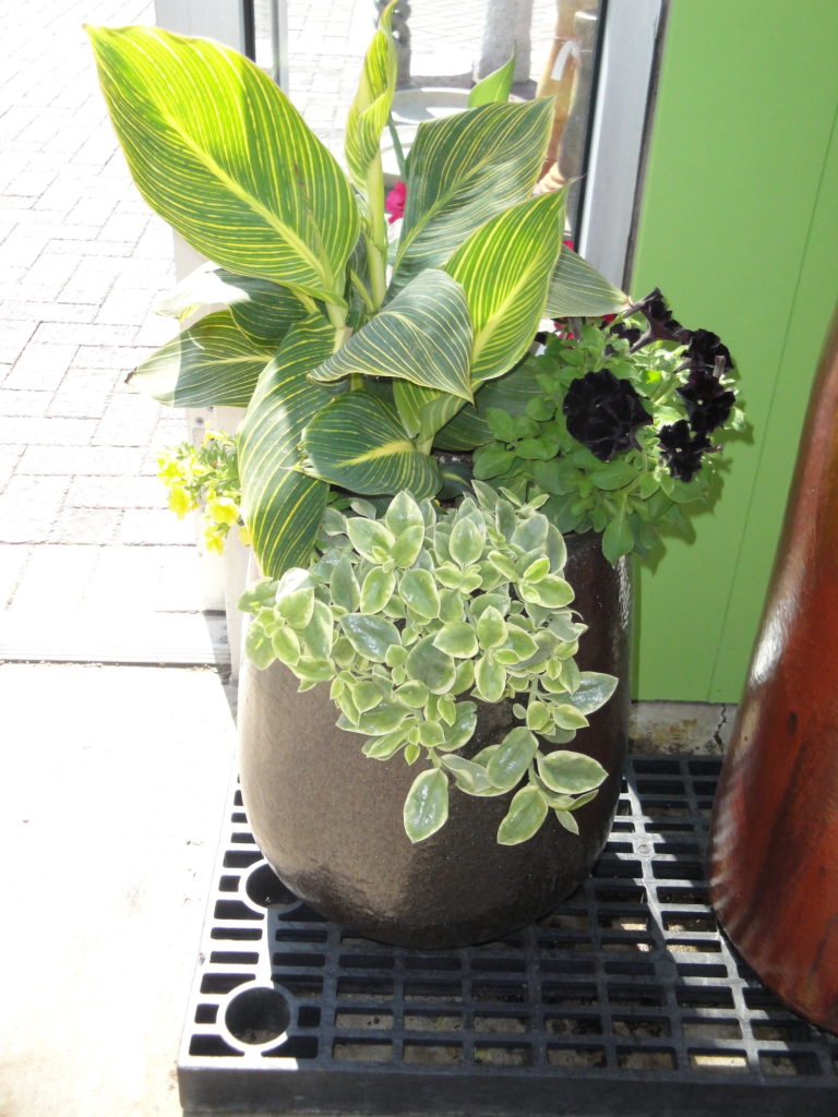green plants in gray container