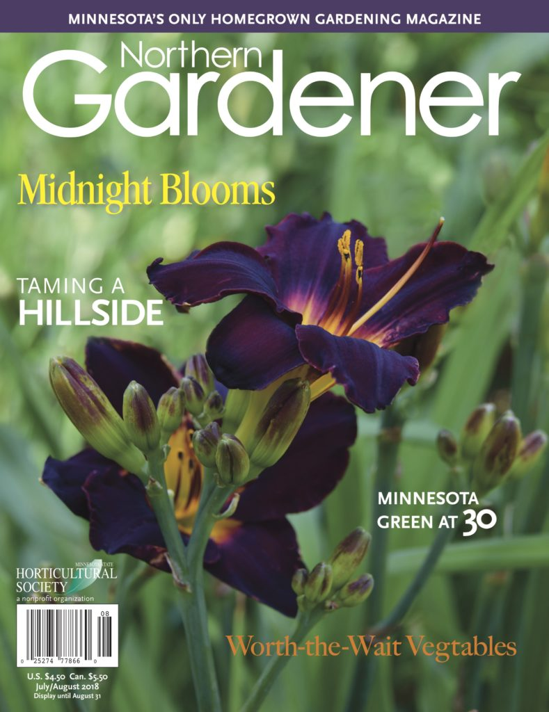 Northern Gardener with purple daylily