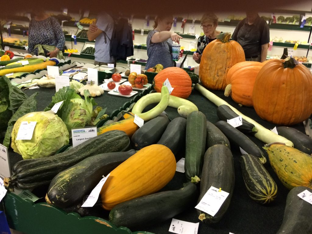 display of large zucchinis and pumpkins