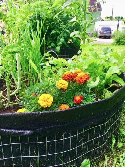 Merrit House garden box