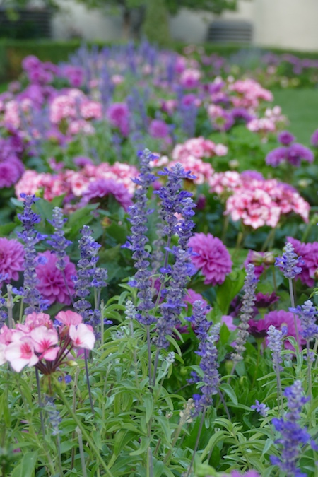 Top 10 Garden Tips From 2019 Northern Gardener Minnesota State