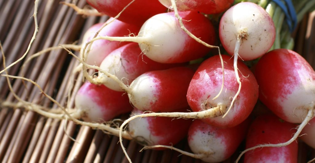 a bunch of spring radishes