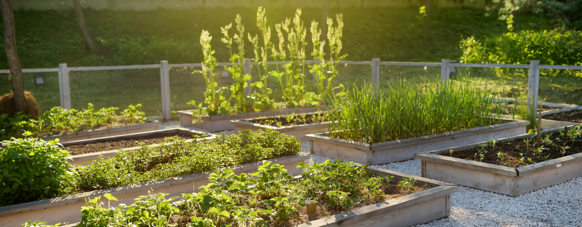 raised beds for RH (2)