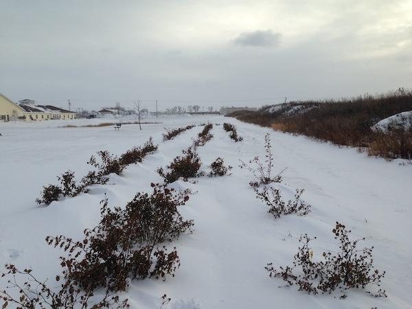 trial garden in winter