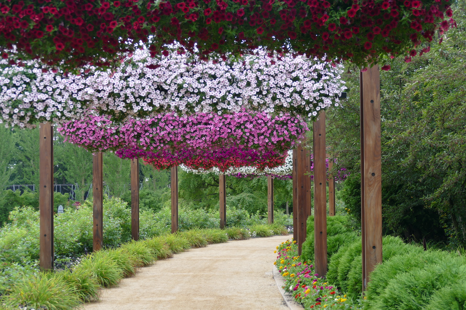 hanging baskets filled with pink and purple flowers