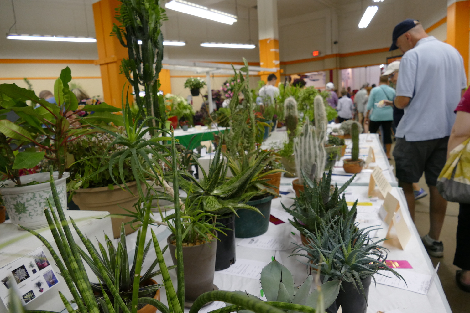 plants on display at state fair