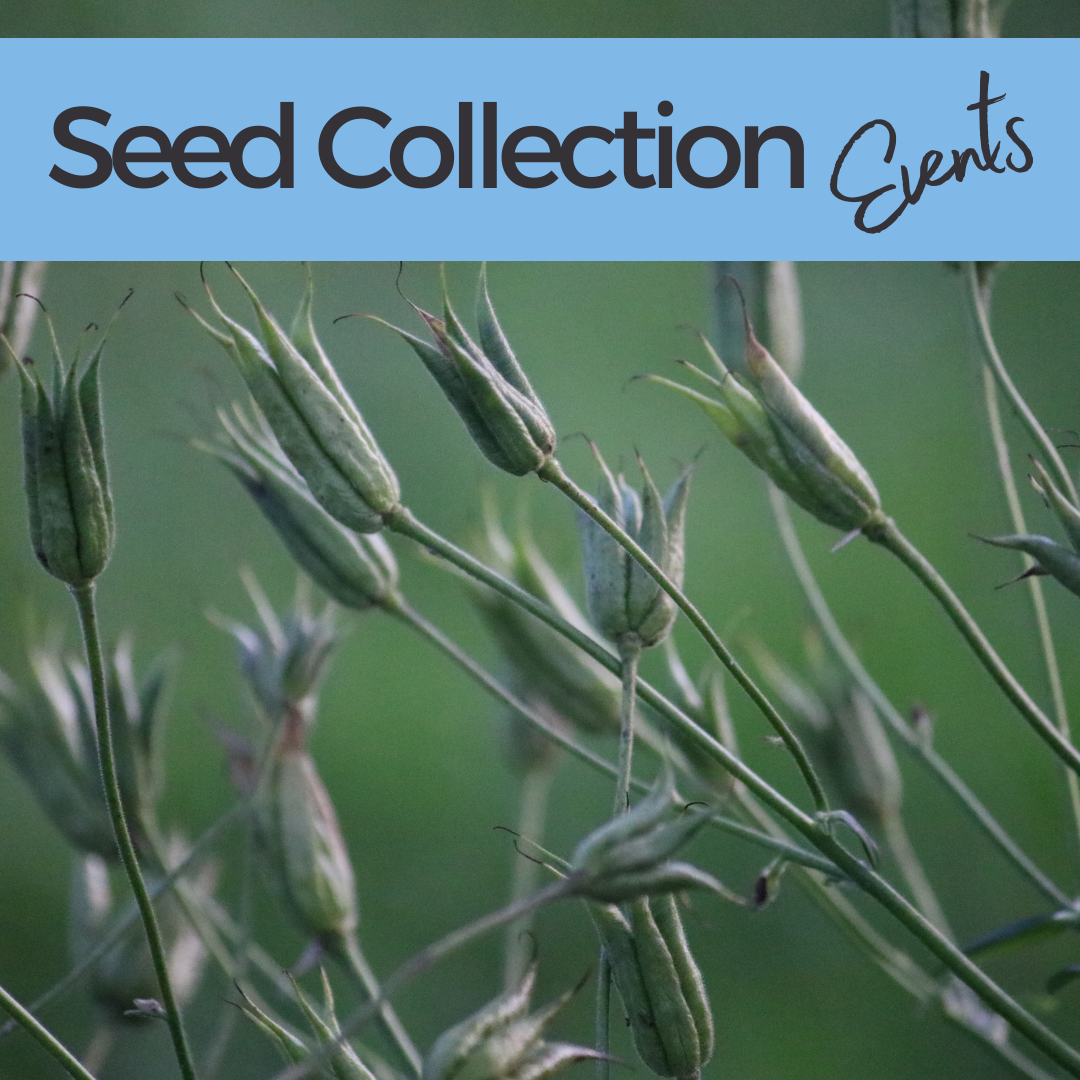 seed collection events homepage tile (3)