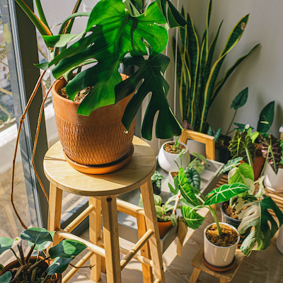 houseplants arranged indoors