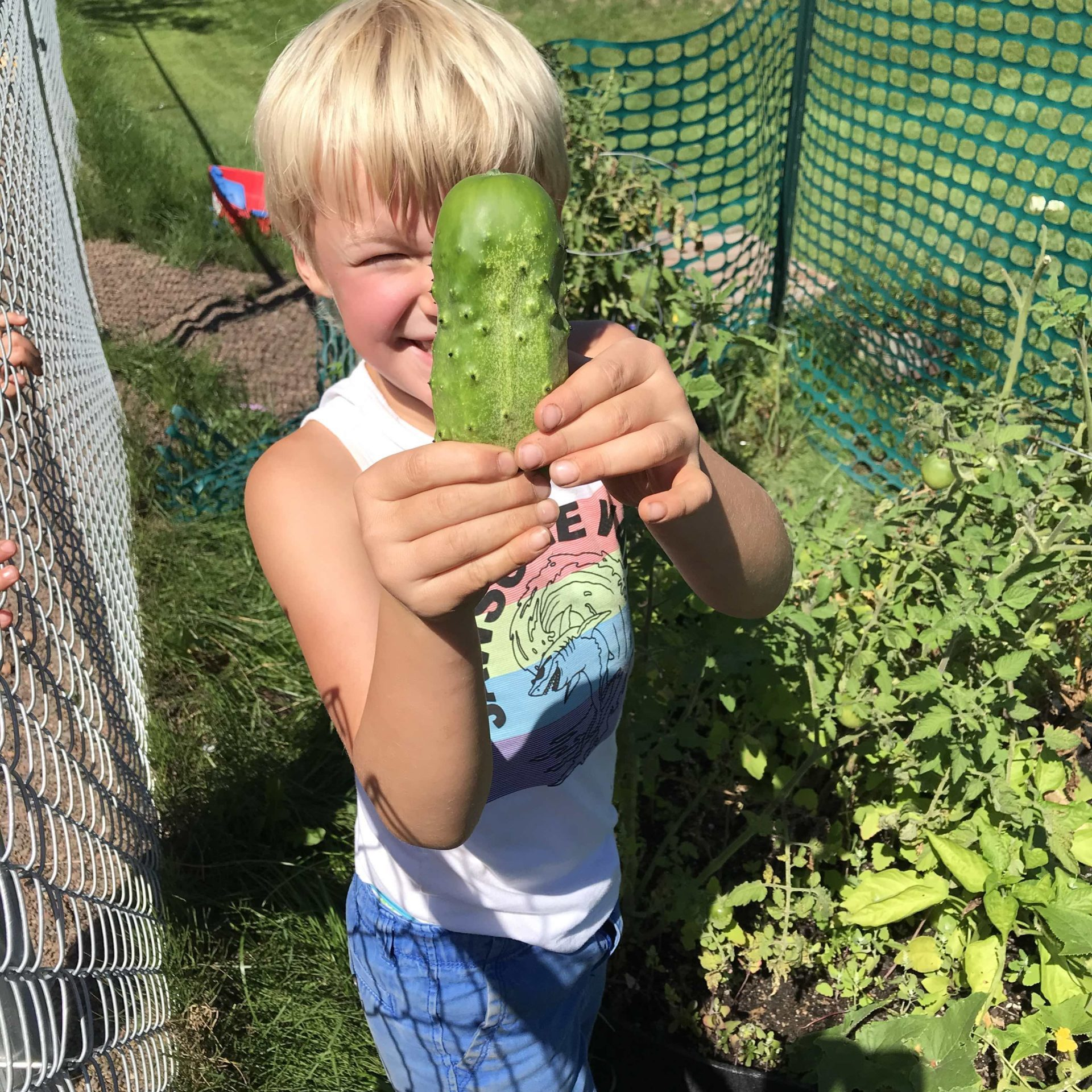 child and homegrown cucumber