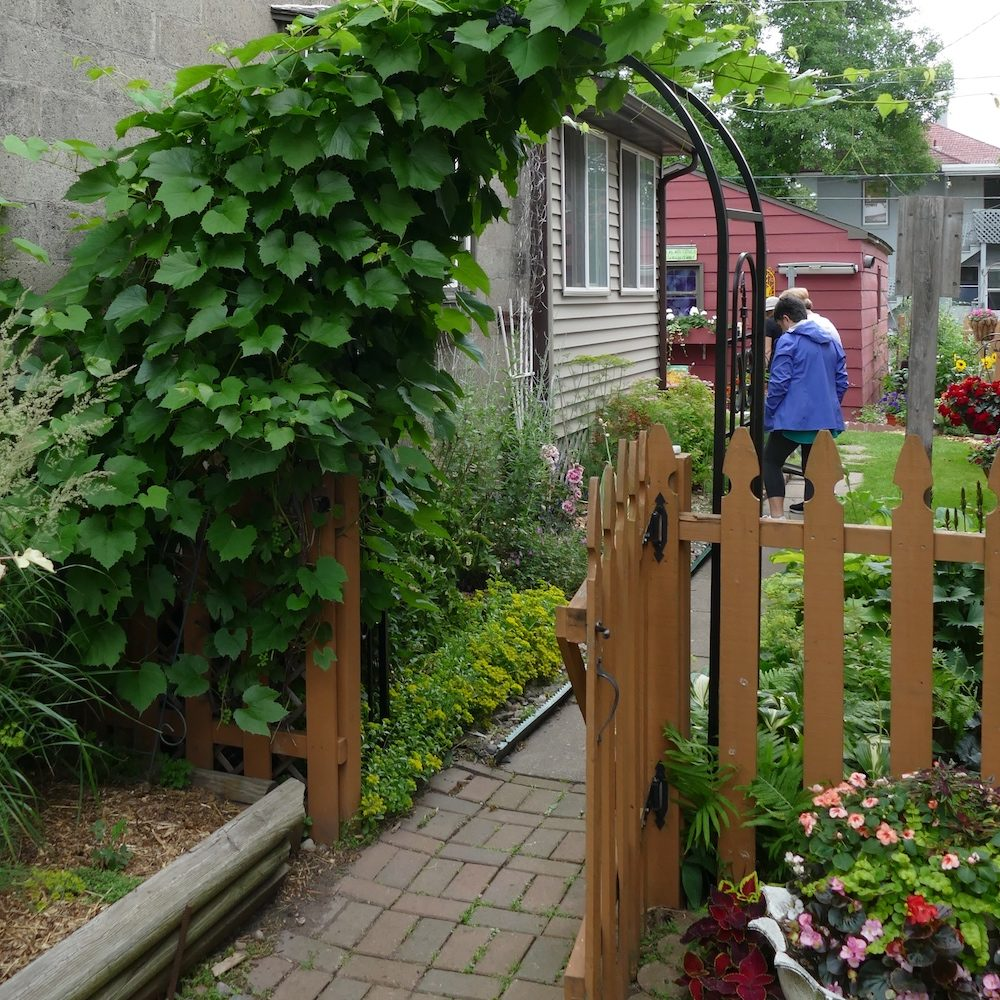 Here's another gate -- this one in Duluth. The gardener has covered the arbor with grapes.